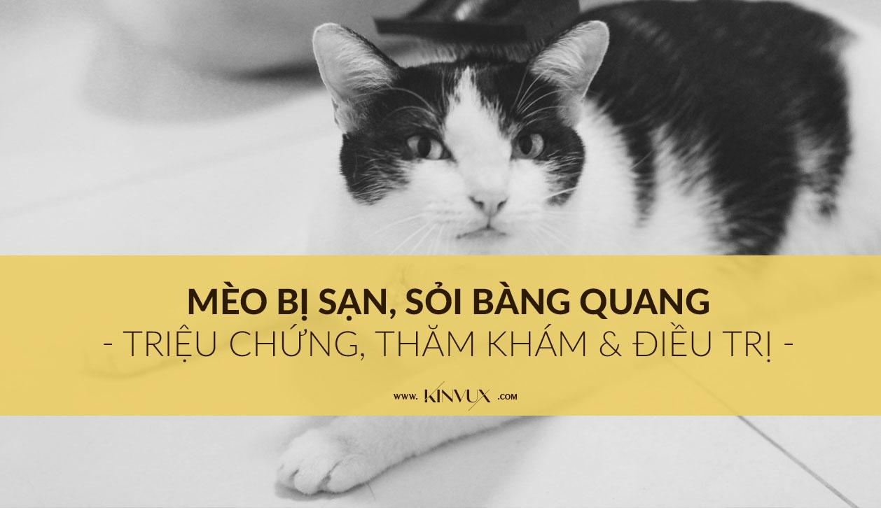 Mèo bị sạn bàng quang